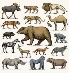 gorilla moose or eurasian elk camel and deer vector image vector image
