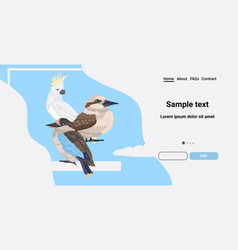 common starling kookaburra cockatoo birds cartoon vector image