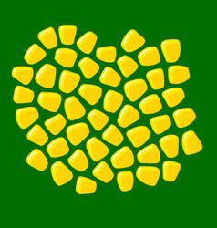 corn seeds bunch grains fresh sugar corn vector image