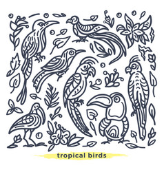set wild tropical bird vector image