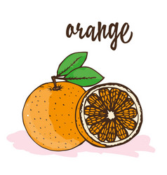 orange vector image