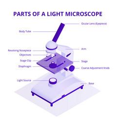 Microscope isometric with light vector