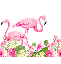 tropical birds and flowers fashion vector image