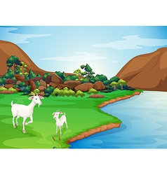 Two goats at the riverbank vector image