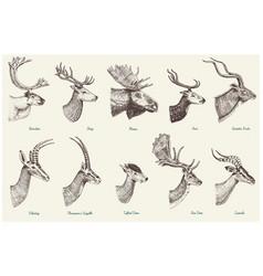big set of horn antlers animals moose or elk with vector image
