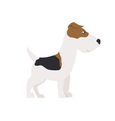 fox terrier in front of white background vector image vector image