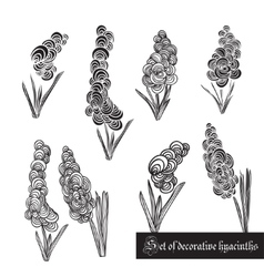 Set of decorative elements hyacinth and leaves vector image vector image