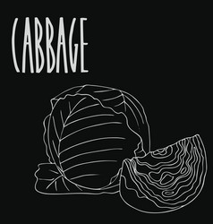 Chalkboard green cabbage vegetable vector
