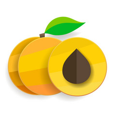 flat apricots in section and whole with leaves vector image