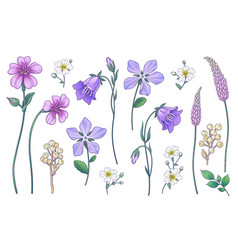 hand drawn colorful wild flowers set vector image
