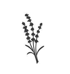 Lavender silhouette icon vector