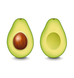 Two realistic avocado with white background vector