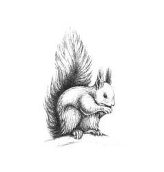 hand drawn wild forest squirrel vector image