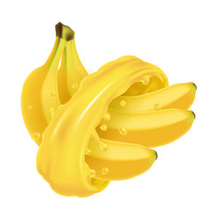 bunch of bananas in juice splash vector image