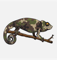 Chameleon uniform cute animal template vector