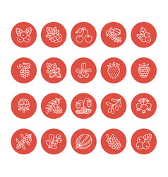 Forest berries flat line icons - blueberry vector