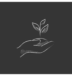 Hands holding seedling in soil drawn in chalk vector