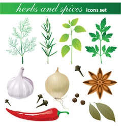 highly detailed herbs and spices icons set vector image vector image