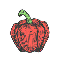 Hand drawn of red pepper sketch style doodle vector