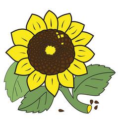 Large ripe sunflower vector