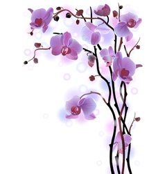 Vertical background with violet orchids vector image vector image