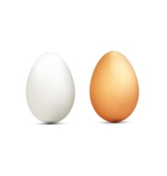two eggs isolated on white background vector image