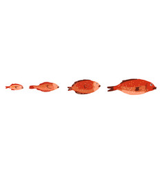 red fish different sizes set red snapper vector image