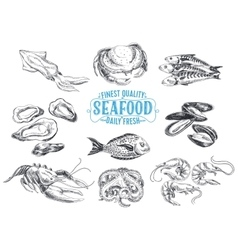 hand drawn with seafood vector image vector image