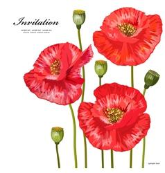 poppy2 vector image