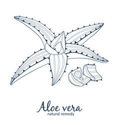 aloe vera plant icon black vector image