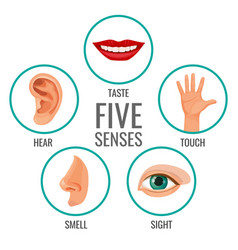 Five senses of human perception poster icons vector