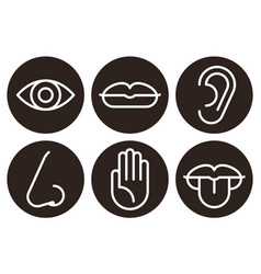 sensory organs icon set vector image