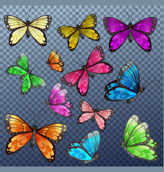 set different color butterfly on transparent vector image
