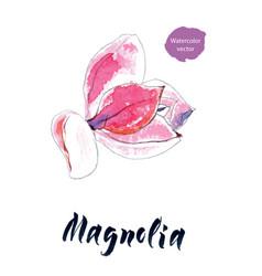 flower of magnolia watercolor vector image vector image