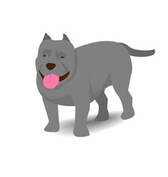 Pitbull with shadow on white background vector