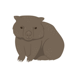 wombat isolated on a white background vector image