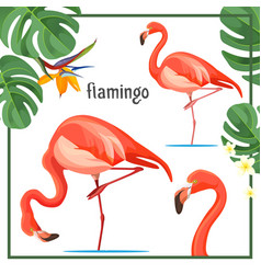 Flamingo poster with leaves and animals vector