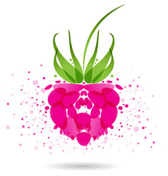 raspberries splash vector image