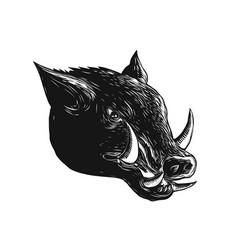 Razorback wild boar scratchboard vector