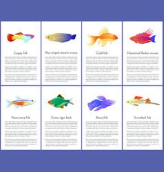 Set of aquarium fishes color vector