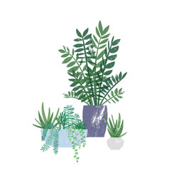 zamioculcas and succulents in pots flat vector image