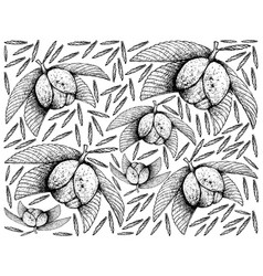 Hand drawn background of chalta or elephant apple vector
