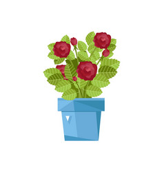 spring flower in pot isolated icon vector image