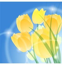 Yellow tulips vector image