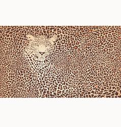 Pattern background leopard vector image vector image