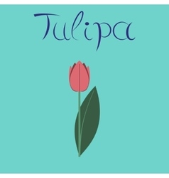 Flat stylish background plant tulipa vector