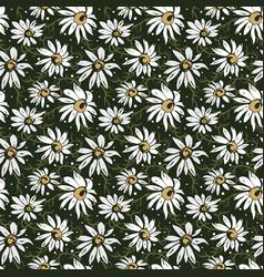 Chamomile seamless pattern vector