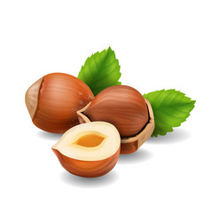 Hazelnuts with leaves realistic vector
