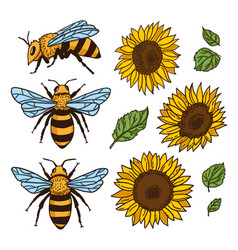 Set with bees and sunflowers hand drawn vector
