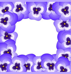 violet viola garden pansy flower border vector image